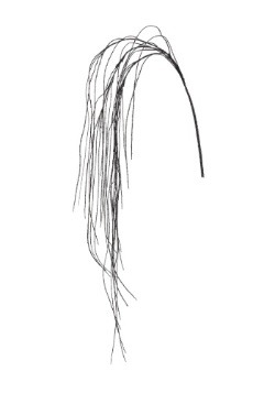 69 Inch Black Weeping Willow Spray