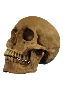 Resin Cranium Prop