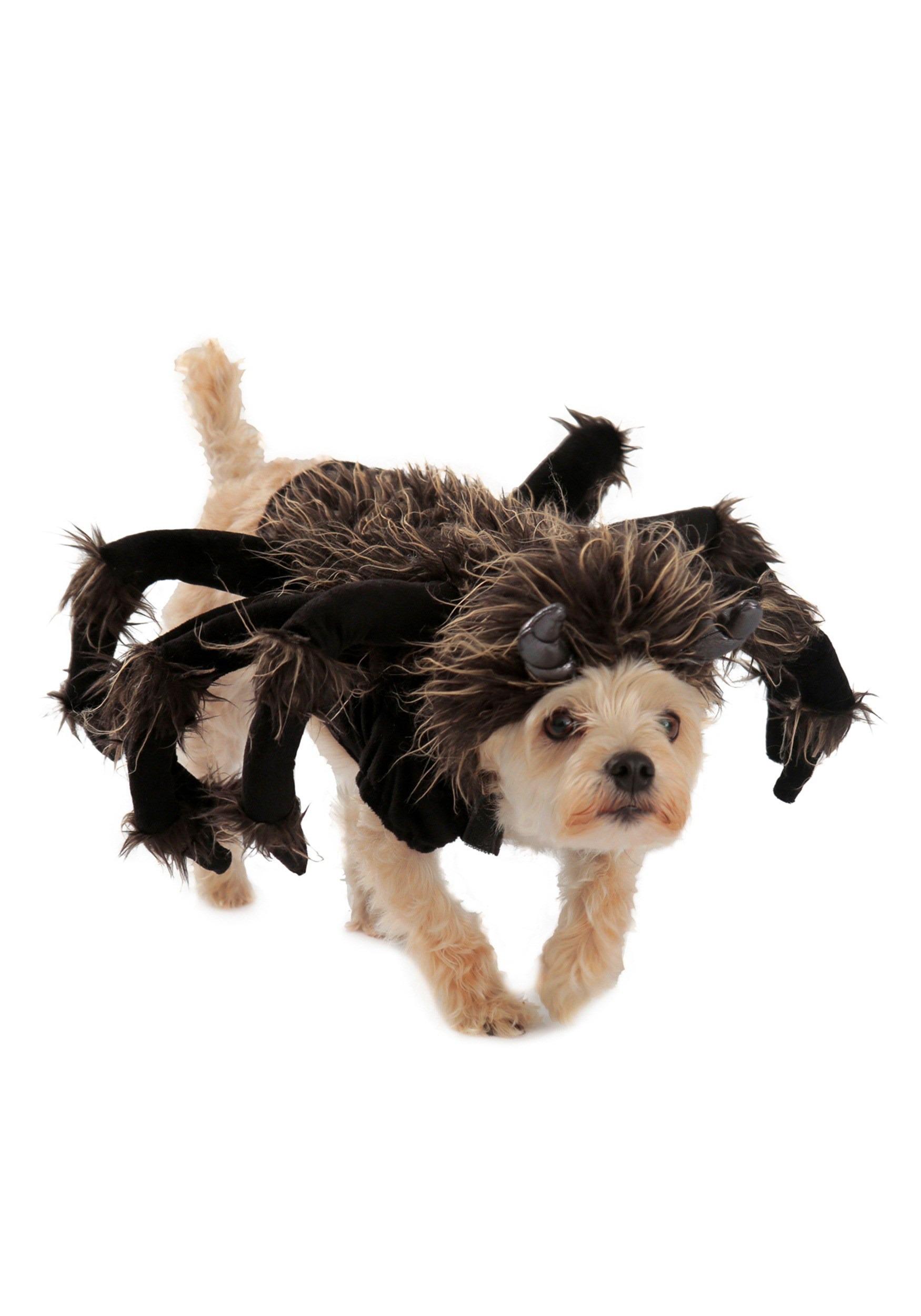 tarantula dog costume. Black Bedroom Furniture Sets. Home Design Ideas