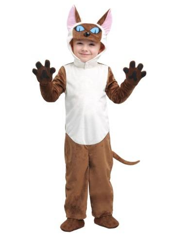 Toddler Siamese Cat