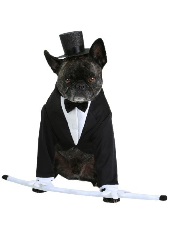 Formal Tuxedo Dog Costume