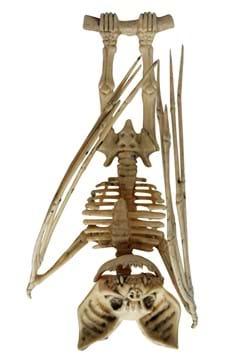 Upside Down Skeleton Bat