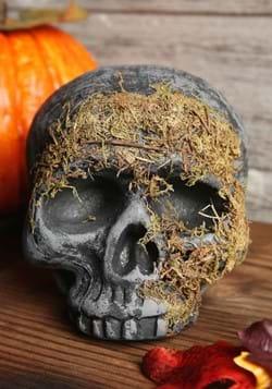 Moss Covered Skull_Update